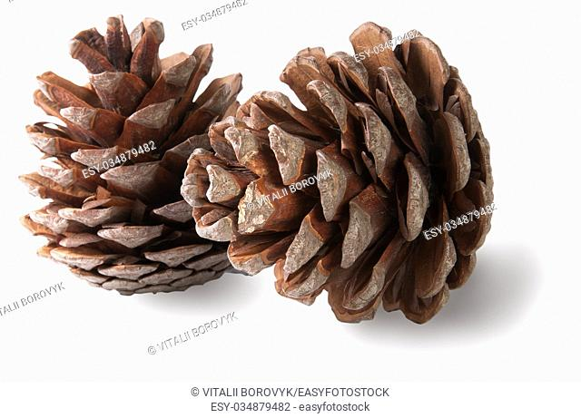 Two juniper cones isolated on white background
