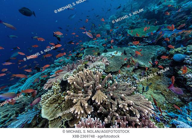 A profusion of coral and reef fish on Batu Bolong, Komodo National Park, Indonesia