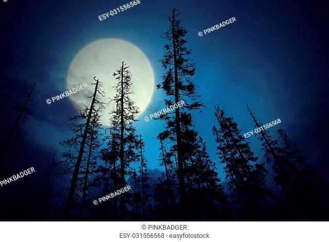 Low angle view of spooky forest with dark blue sky and big full moon