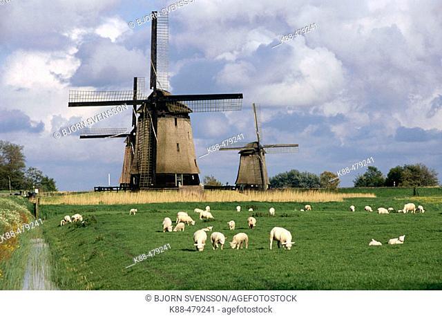 Windmills. Holland