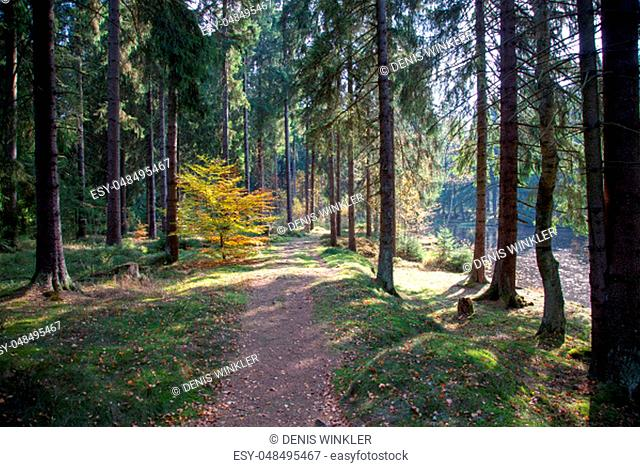 a forest path with many roots in autumn on a sunny day