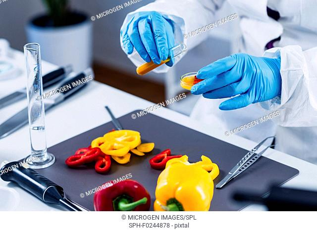 Quality control food safety inspector working in a laboratory