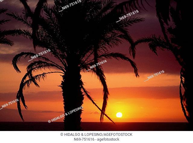 Sunset at Playa de las Americas, Tenerife, Canary Islands, Spain