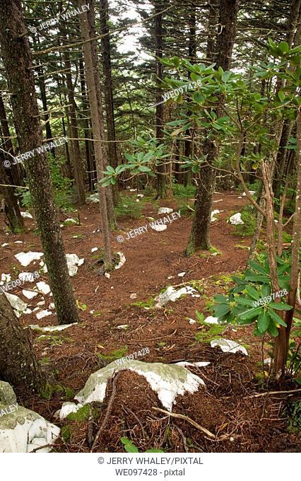 Shinning Rock Wilderness Area, Pisgah Nat  Forest, NC