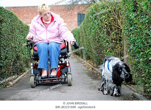Wheelchair user talking dog for walk