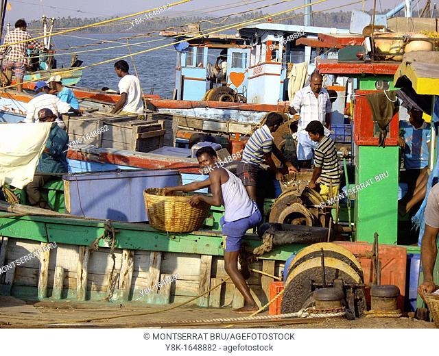 Fishermen downloading days catch at Chapora jetty in Goa, India