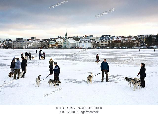 Husky dog owners gather on ice-covered Tjornin lake on the last day of the year  Reykjavik Iceland
