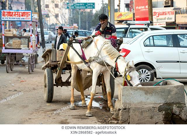 A man sits atop a horse-drawn cart while his horse drinks from a small fountain on the streets of Agra, India