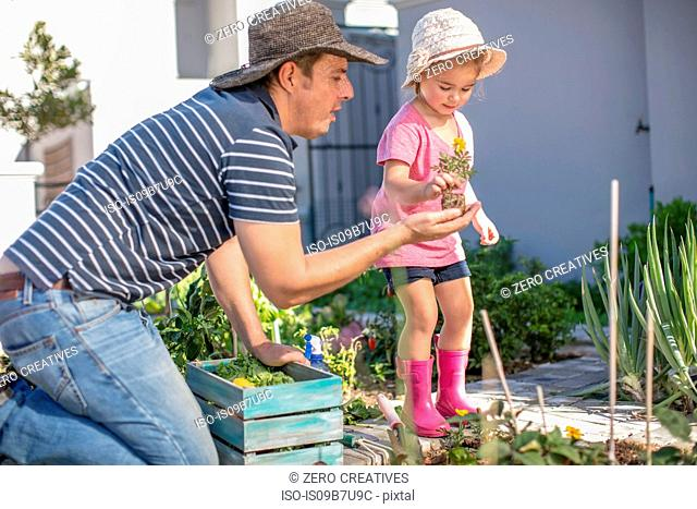 Father and daughter in garden together, planting flowers