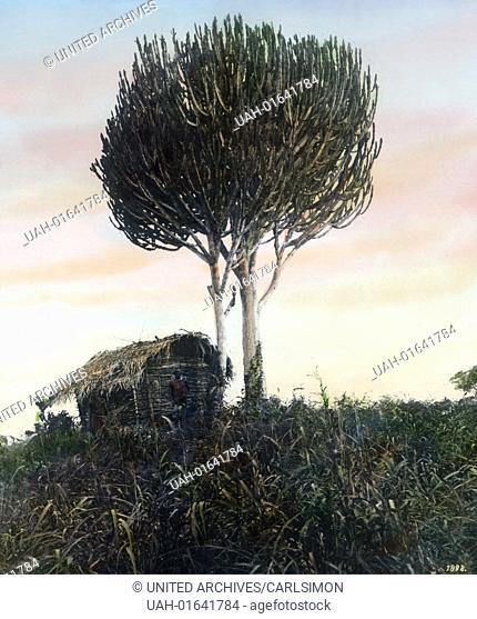 German East Africa (1885 - 1918) - Landscape and Euphorbia plants. Carl Simon Archive, image date circa 1905