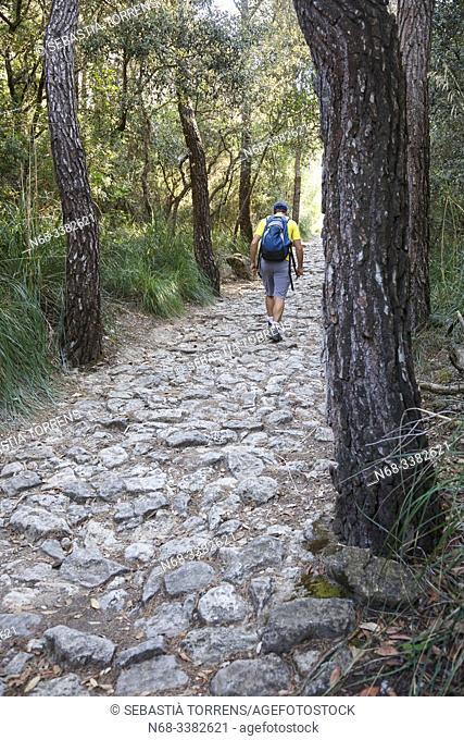 Hiker in the Cami des Correu, between Banyalbufar and Esporlas, Majorca, Spain