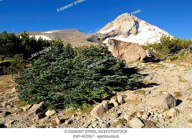 alpine meadow, east face of Mount Hood volcanoe, Cooper Spur Trail, Cascade Range, Oregon, USA