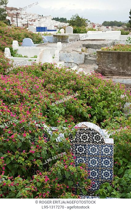Tombstone covered by vegetation and flowers in a Muslim cemetery in Tetouan, Morocco