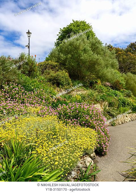 South African Terraces, Ventnor Botanic Gardens, Isle of Wight, UK