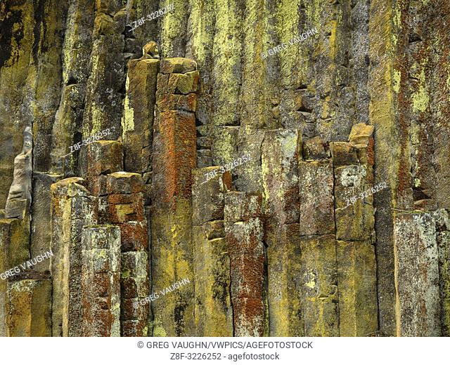 Lichen-covered columnar basalt at Soda Springs on the North Umpqua River; Umpqua National Forest, Oregon
