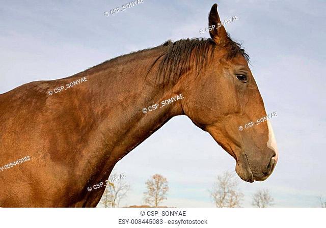 Profile of Horse