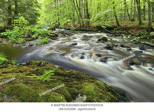 Bode River (Kalte Bode) in the Elendstal valley. Kalte Bode, Schierke, Harz, Saxony-Anhalt, Germany, Europe