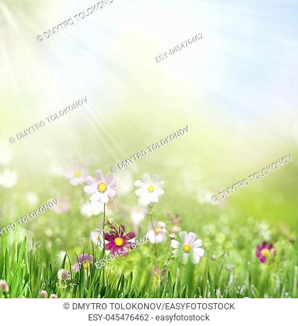 Beauty summer day on the smokey meadow, environmental backgrounds