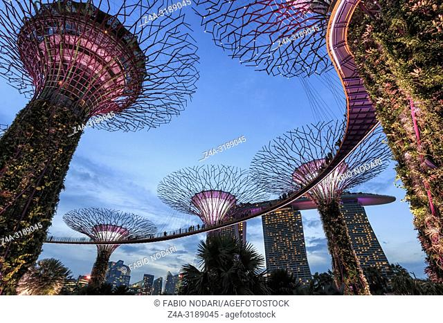 Singapore, Singapore - October 16, 2018: Supetree Grove and Marina Bay Sands hotel at sunset in the Gardens by the Bay in Singapore