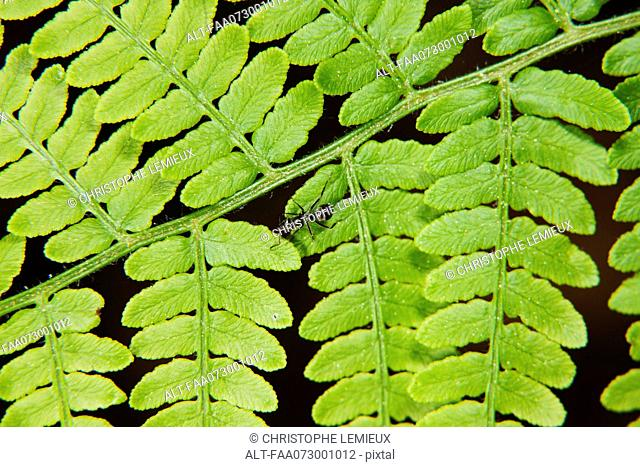 Ant crawling on fern frond