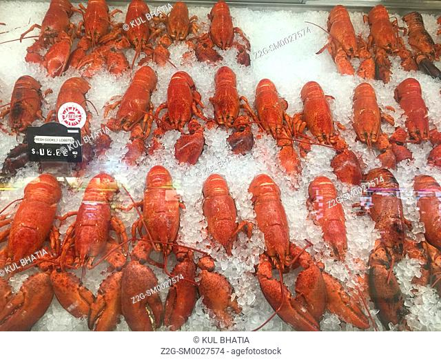 Fresh cooked local lobster on ice, with price displayed in Canadian dollars, in a showcase at an airport, Nova Scotia, Canada