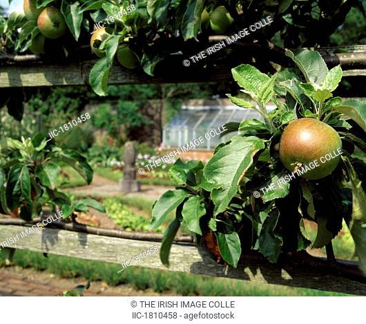 Espalier Apples, Walled Garden, Lodge Park, Straffan, Co Kidare, Ireland