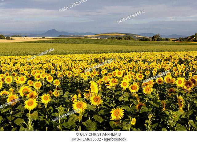 France, Puy de Dome, Parc Naturel Regional des Volcans d'Auvergne Regional Nature Park of Auvergne Volcanoes, the Auvergne Volcanoes range and field of...
