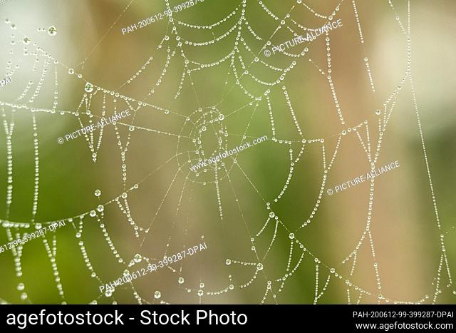 12 June 2020, Baden-Wuerttemberg, Rottweil: Drops of water hang from a spider web. Photo: Silas Stein/dpa. - Rottweil/Baden-Wuerttemberg/Germany