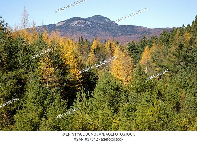 Autumn foliage along the Kancamagus Highway route 112, which is one of New England's scenic byways  Located in the White Mountains