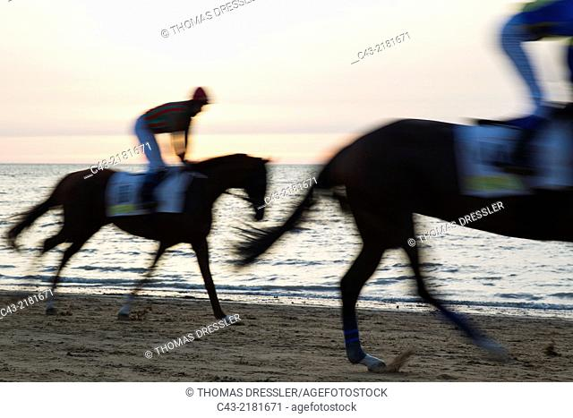 Riding towards the starting gate during the famous horse races of Sanlúcar de Barrameda which take place every year during August along a 1