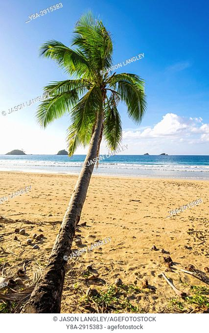 Palm tree on Nacpan Beach, El Nido, Palawan, Philippines