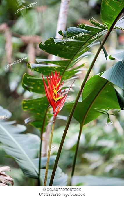 Guatemala, Alta Verapaz, Wild Orchids