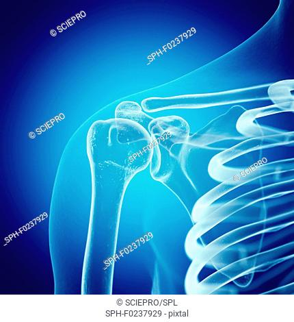 Illustration of the shoulder joint