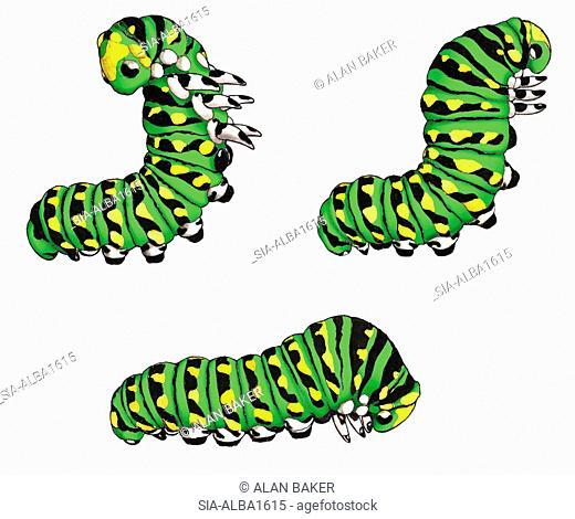 Caterpillars on white background