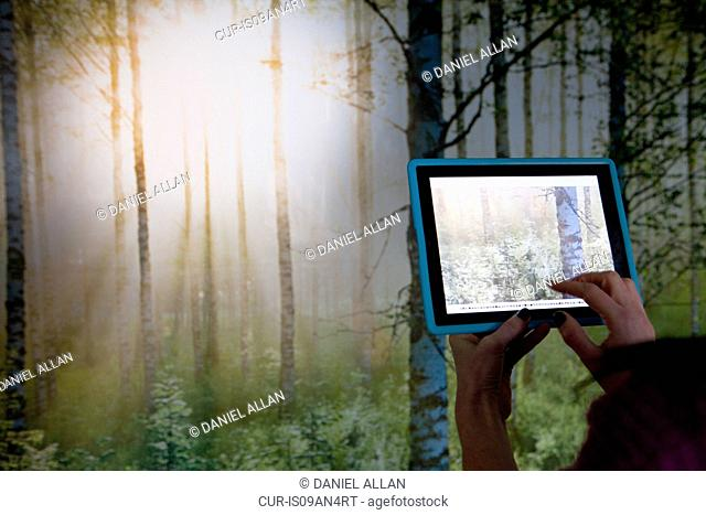 Person using digital tablet to photograph woodland scene