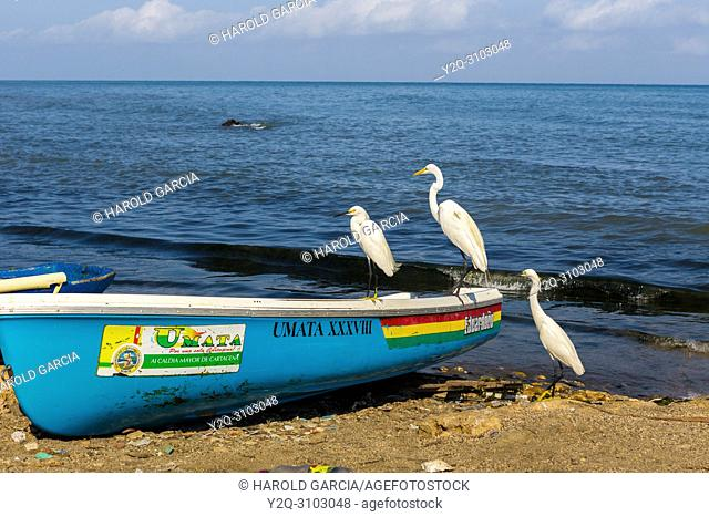 Herons on artisan canoes in ocean at the ancient city of Cartagena de Indias. UNESCO's historical patrimony of humanity. Cartagena, Colombia