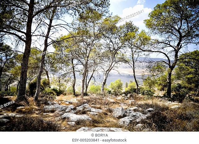 Bet Shemesh wood