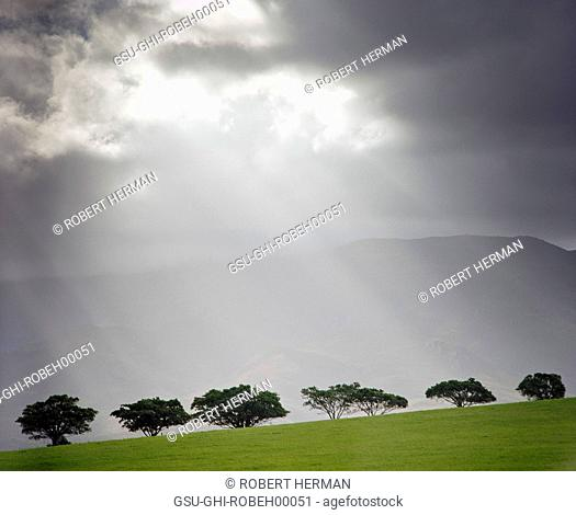 Rays of Light Shining Down Through Clouds on Row of Trees