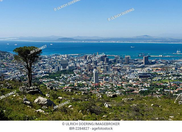 Cape Town city bowl view from the Platteklip route on Table Mountain, Cape Town, South Africa, Africa