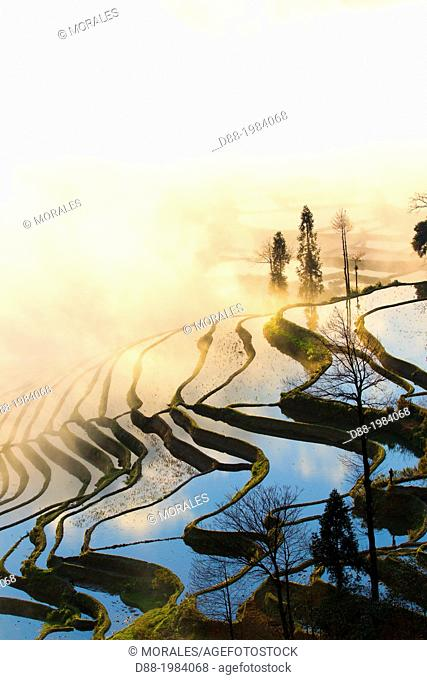 China , Yunnan province , Hani people, Yuanyang , Duoyishu village, rice terraces , sunrise