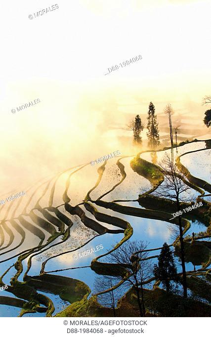China , Yunnan province , Hani people, Yuanyang , Duoyishu village, rice terraces , sunrise