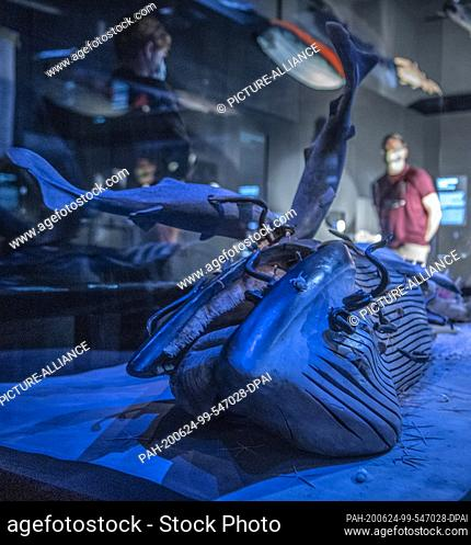 24 June 2020, Hessen, Frankfurt/Main: The realistically reproduced model of a dead whale lying on the seabed is one of the central attractions of the new...