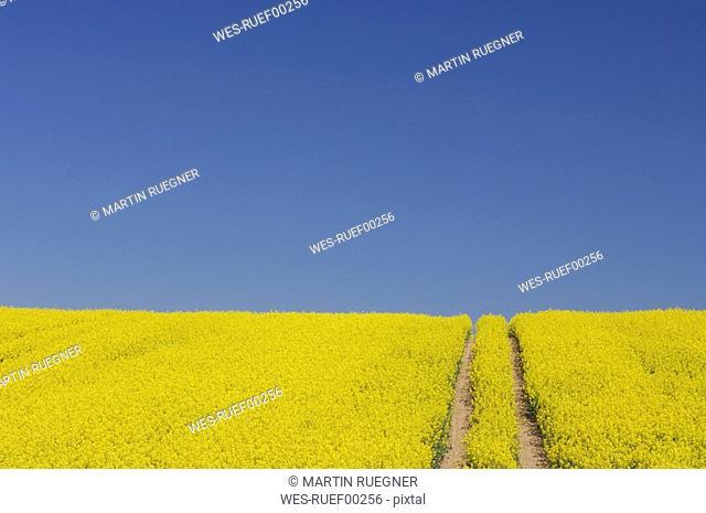 Germany, Mecklenburg-Western Pomerania, Track in rape field