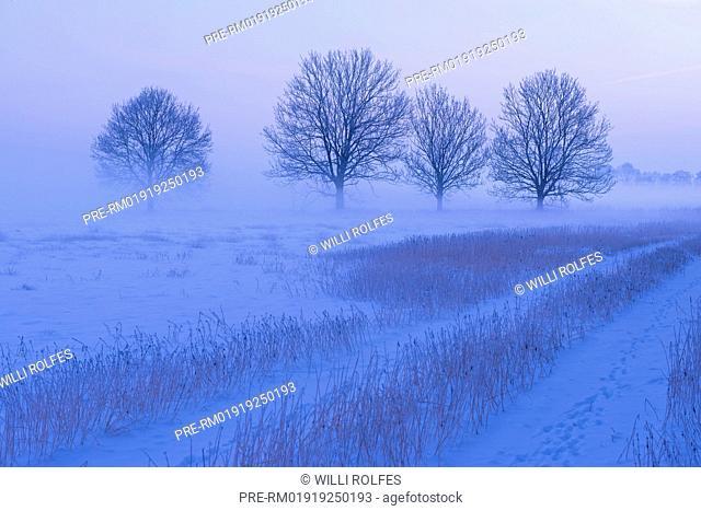 Winter landscape, Vechta district, Niedersachsen, Germany / Winterlandschaft, Landkreis Vechta, Niedersachsen, Deutschland