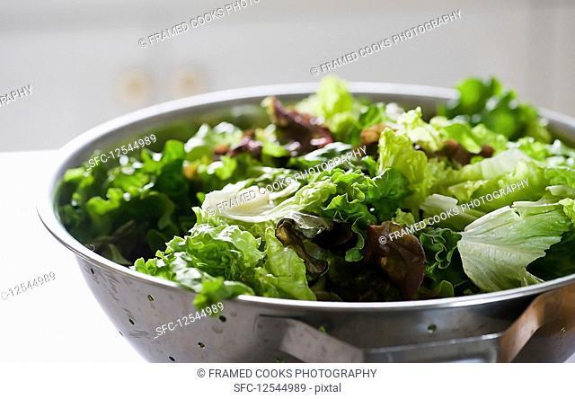 Variety of lettuce leaves