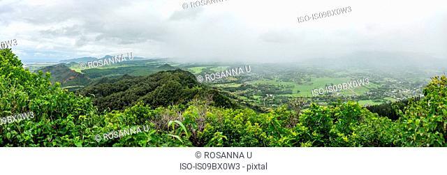 Dense forest, Kuilau Ridge Trail, Kauai, Hawaii