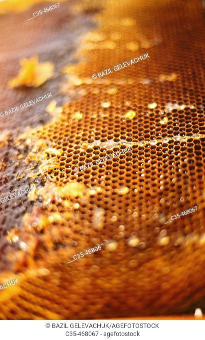 Honey. An apiary