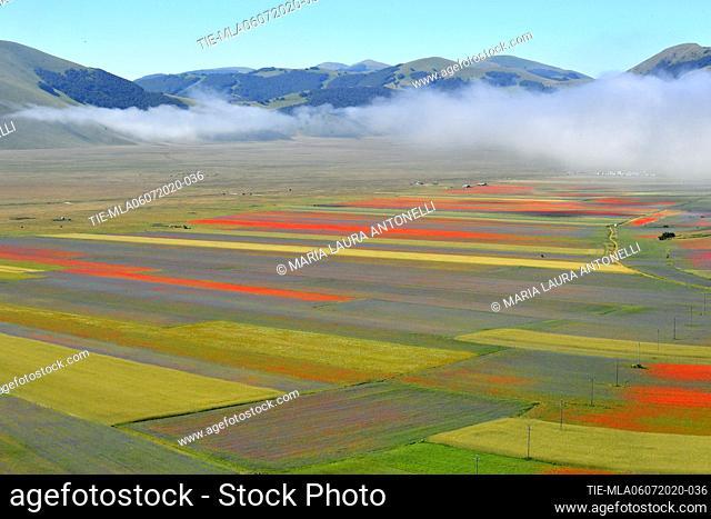 Fog on the plain of lentils bloom , Castelluccio di Norcia (Perugia) ITALY-07-07-2020