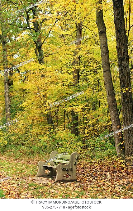 A park bench in a forest preserve in autumn with leaves scattered on the ground