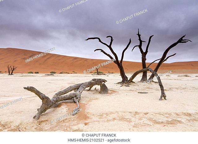 Namibia, Hardap region, Namib desert, Namib Naukluft national park, Namib Sand Sea listed as World Heritage by UNESCO, near Sossusvlei, Dead Vlei